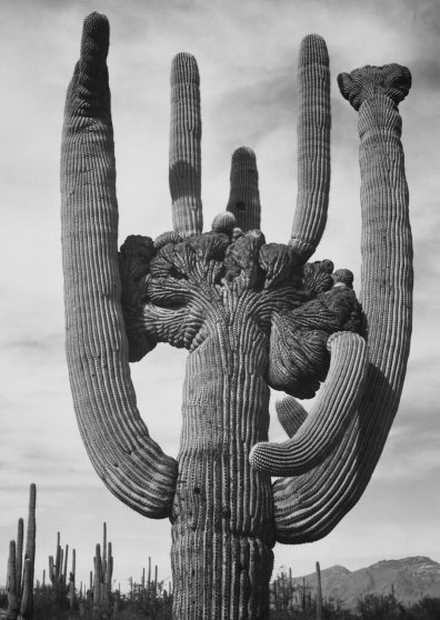 Travel Postcard - Desert Cactus