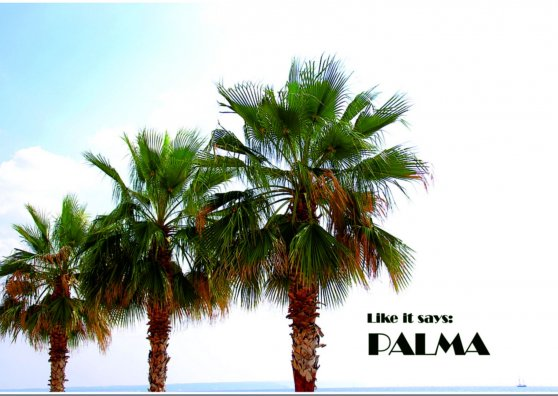 Travel Postcard - Three Palms