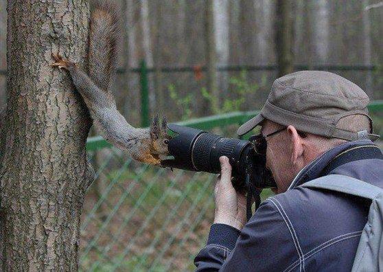 Travel Postcard - Squirrel and camera man