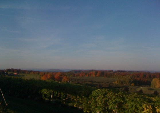 Travel Postcard - Hello from Michigan's Wine Country!