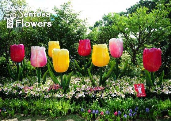 Travel Postcard - Sentosa Flowers