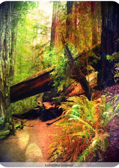 Travel Postcard - redwood forest
