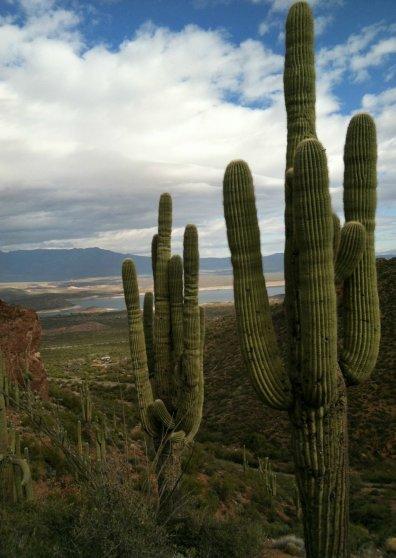 Travel Postcard - Phoenix, AZ