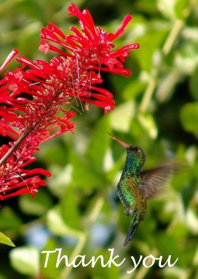 Travel Postcard - Humming Bird, South America