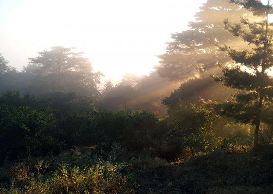 Travel Postcard - Buena Vista Morning