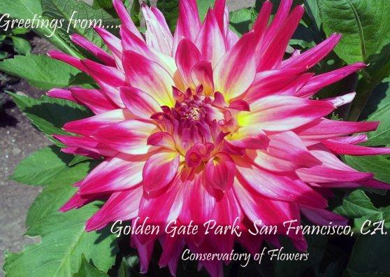 Travel Postcard - Dahlia Greetings