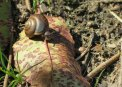 Travel Postcard - Little Forest Snail